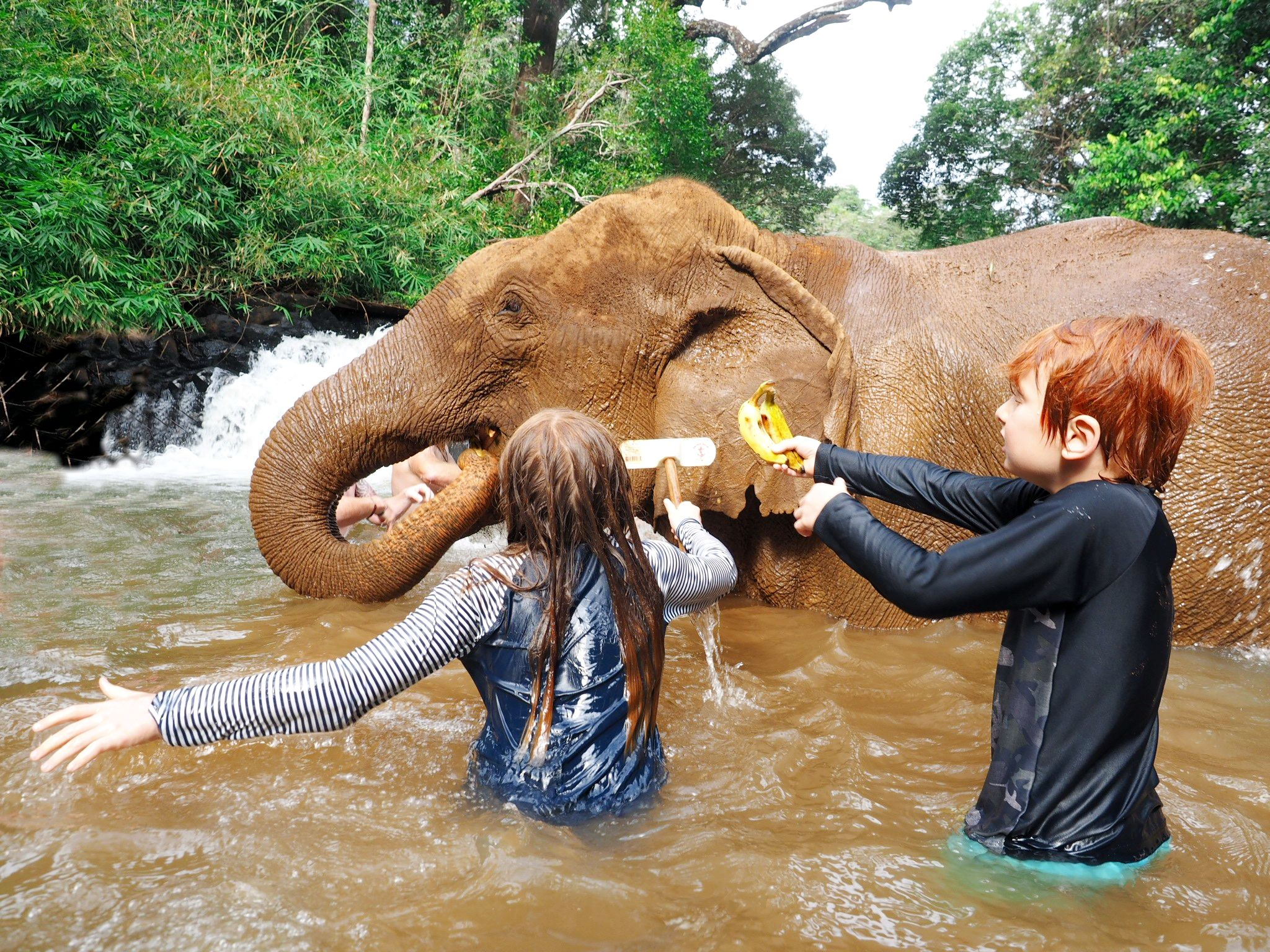 swimming with elephants cambodia